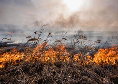 farm-fire